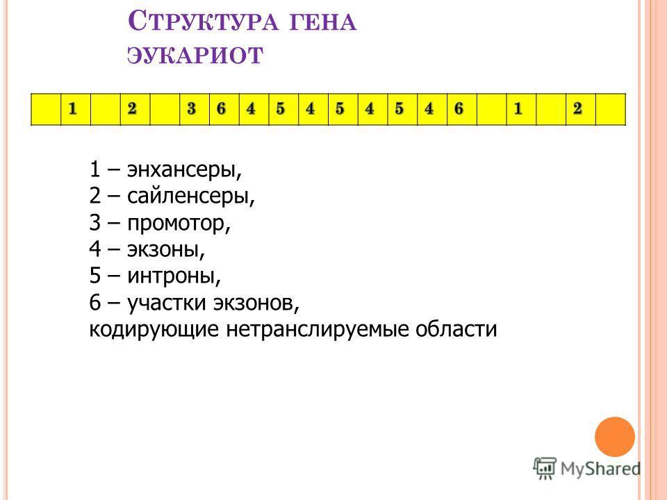 С ТРУКТУРА ГЕНА ЭУКАРИОТ 1 – энхансеры, 2 – сайленсеры, 3 – промотор, 4 – экзоны, 5 – интроны, 6 – участки экзонов, кодирующие нетранслируемые области