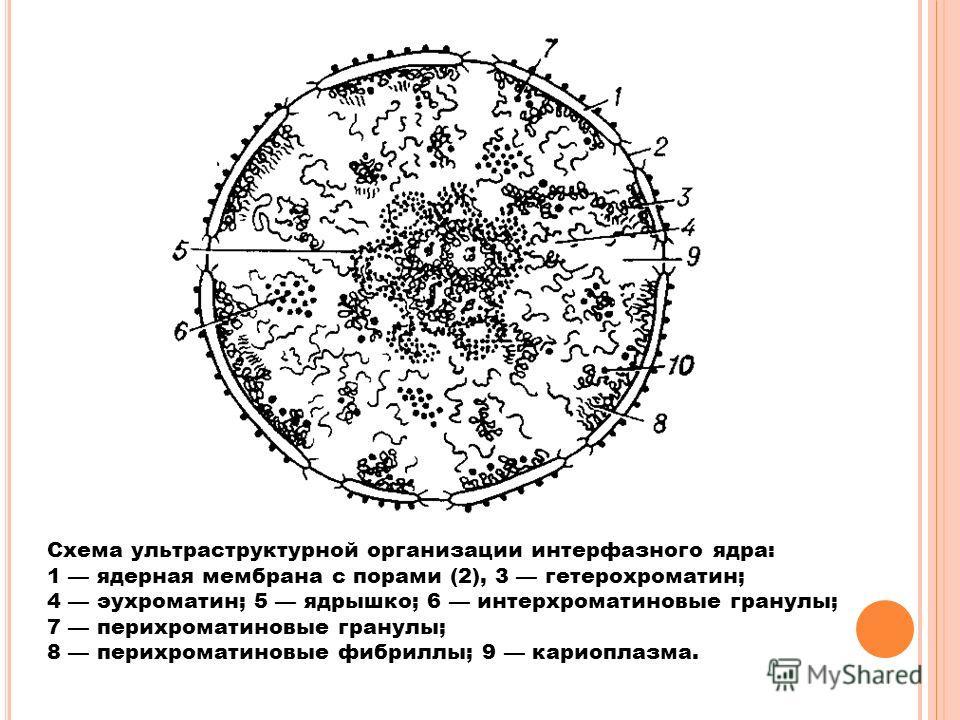 "Презентация на тему: ""Г ЕННЫЙ"