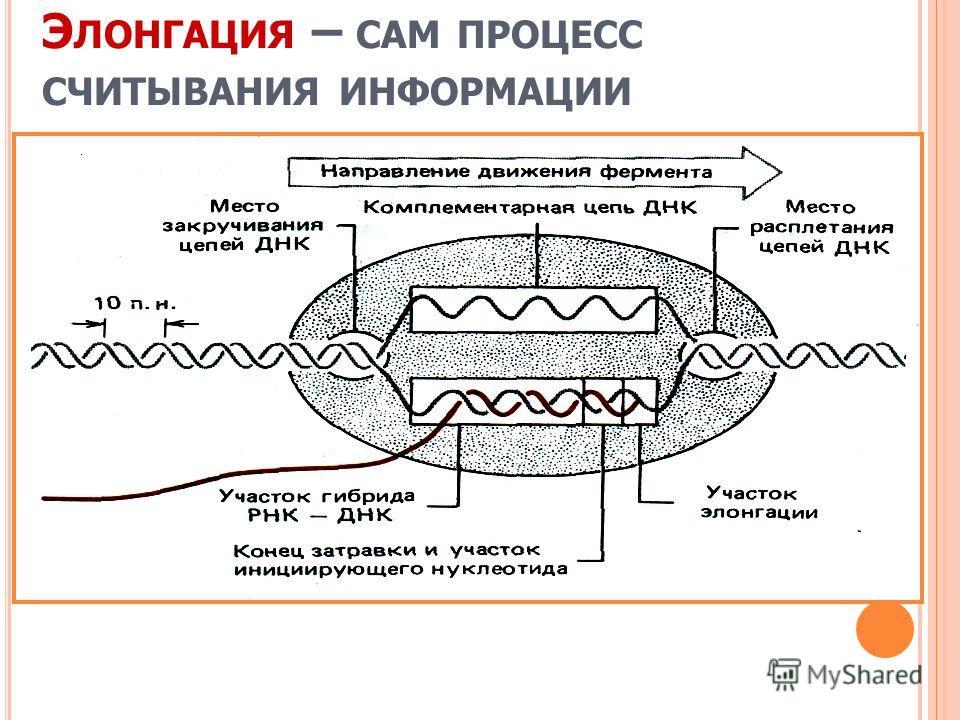 Э ЛОНГАЦИЯ – САМ ПРОЦЕСС СЧИТЫВАНИЯ ИНФОРМАЦИИ