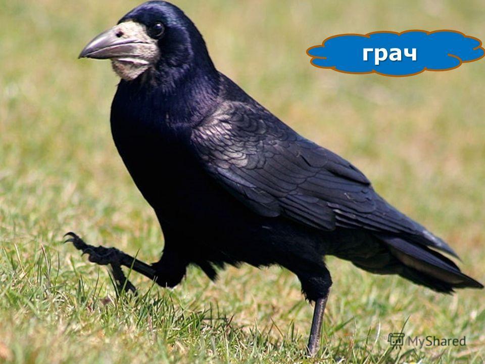 22.11.201310 сорока http://www.deti-66.ru/