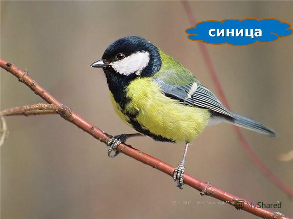 Какая это птица? Спинкой пестровата, Животиком желтовата, Черненькая шапочка И полоска шарфика.