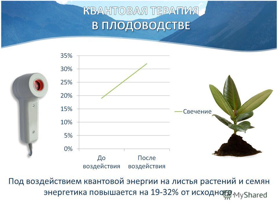 Под воздействием квантовой энергии на листья растений и семян энергетика повышается на 19-32% от исходного.