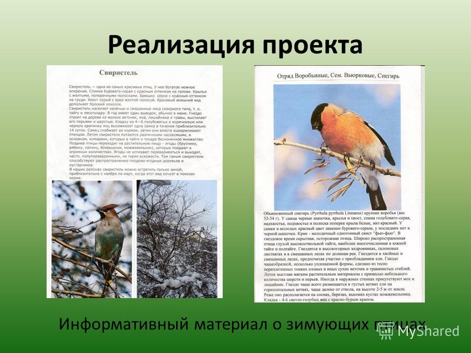 Реализация проекта Информативный материал о зимующих птицах