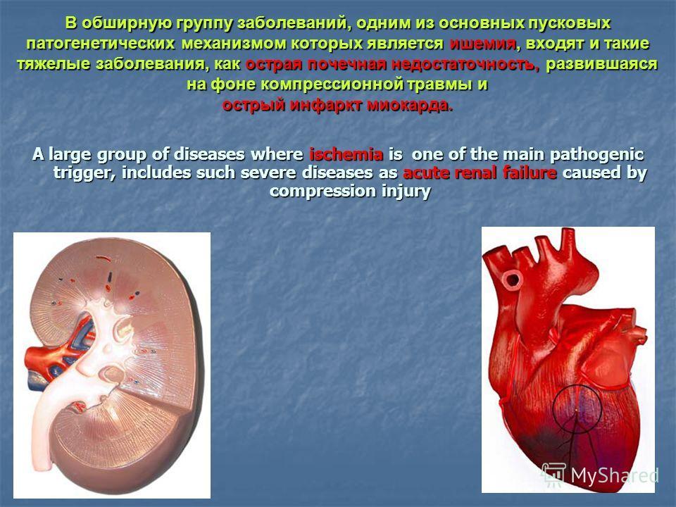 В обширную группу заболеваний, одним из основных пусковых патогенетических механизмом которых является ишемия, входят и такие тяжелые заболевания, как острая почечная недостаточность, развившаяся на фоне компрессионной травмы и острый инфаркт миокард