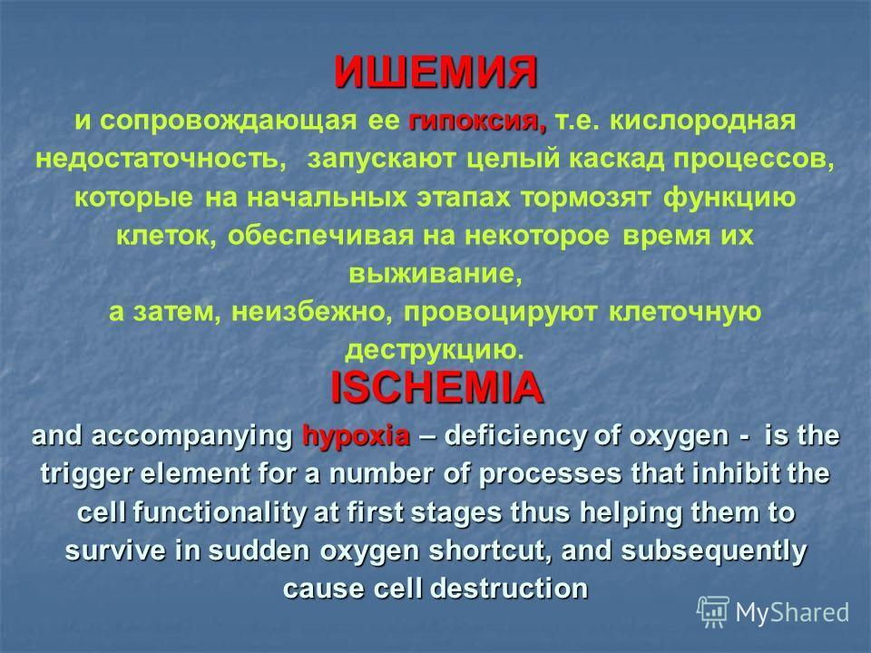 ИШЕМИЯ гипоксия, и сопровождающая ее гипоксия, т.е. кислородная недостаточность, запускают целый каскад процессов, которые на начальных этапах тормозят функцию клеток, обеспечивая на некоторое время их выживание, а затем, неизбежно, провоцируют клето