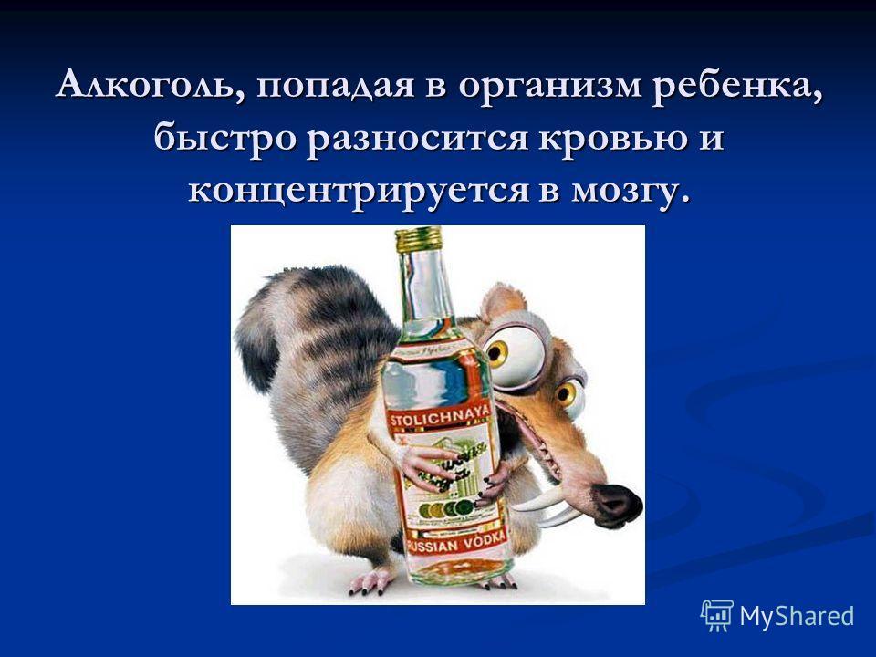 Алкоголь, попадая в организм ребенка, быстро разносится кровью и концентрируется в мозгу.