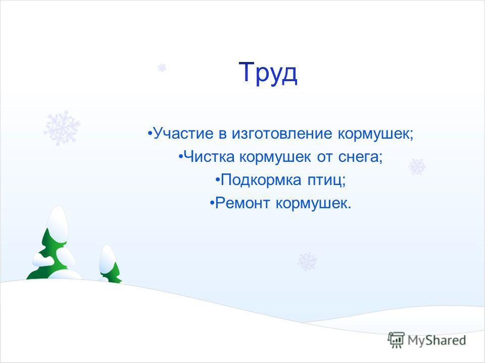 Участие в изготовление кормушек; Чистка кормушек от снега; Подкормка птиц; Ремонт кормушек.