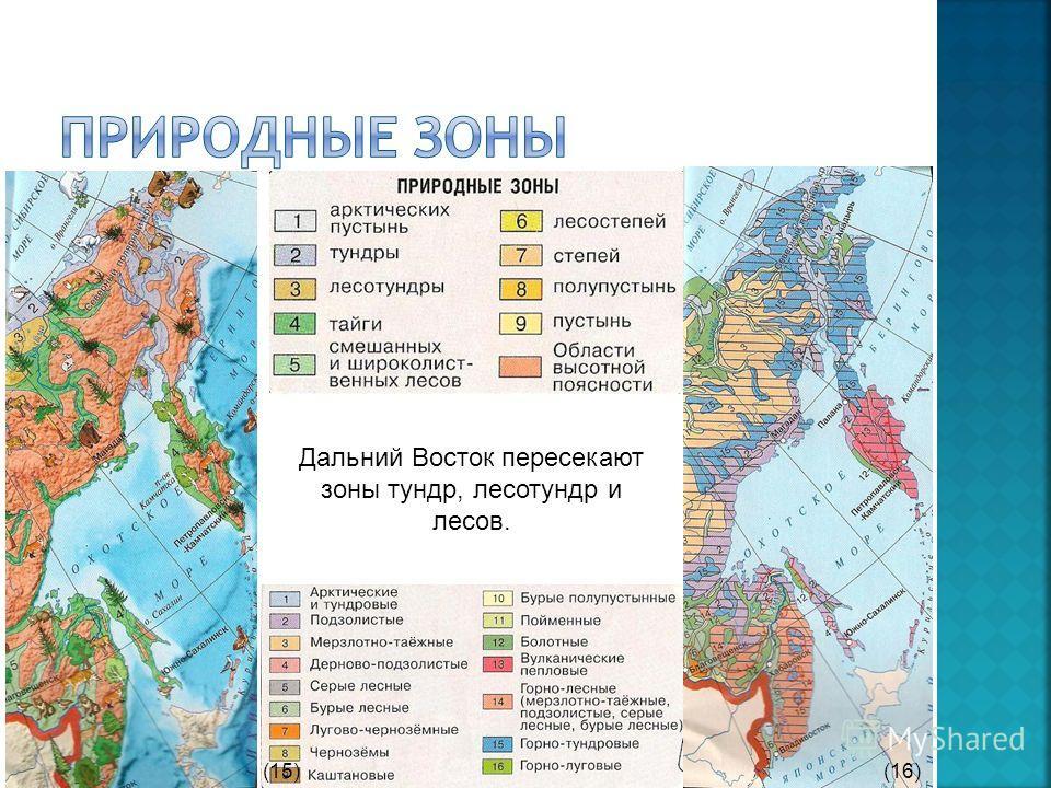 Дальний Восток пересекают зоны тундр, лесотундр и лесов. (15)(16)