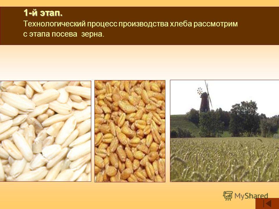 1-й этап. 1-й этап. Технологический процесс производства хлеба рассмотрим с этапа посева зерна.