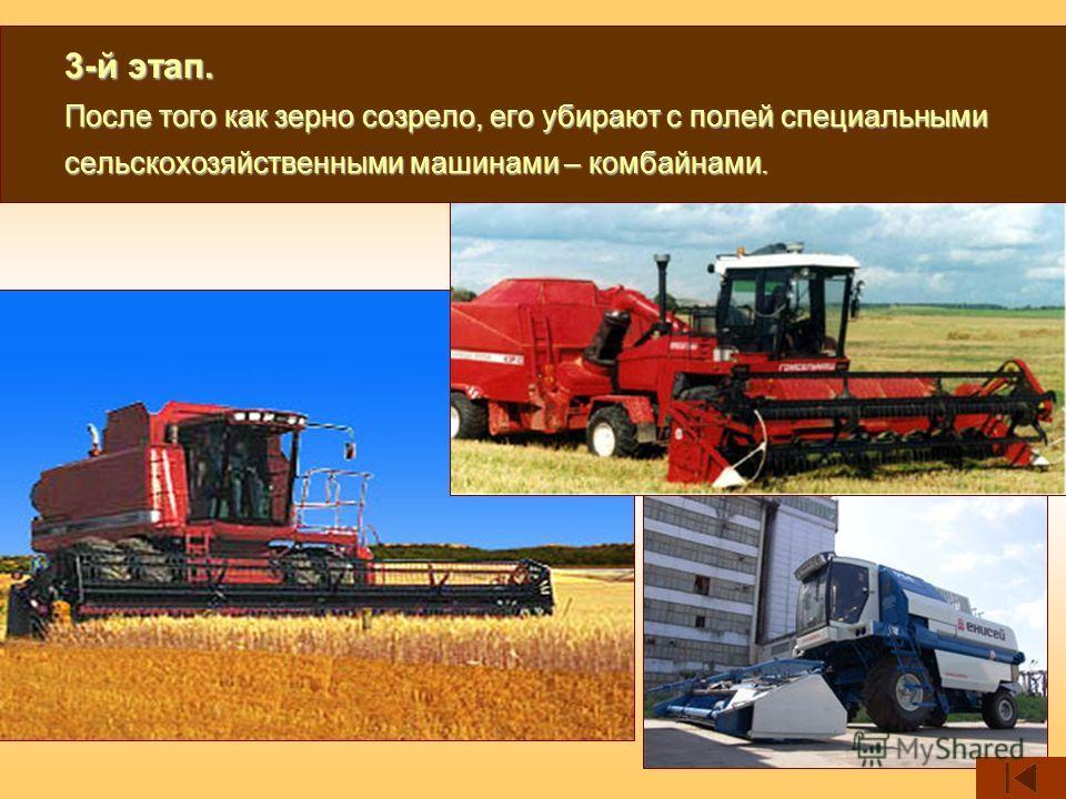 3-й этап. После того как зерно созрело, его убирают с полей специальными сельскохозяйственными машинами – комбайнами.