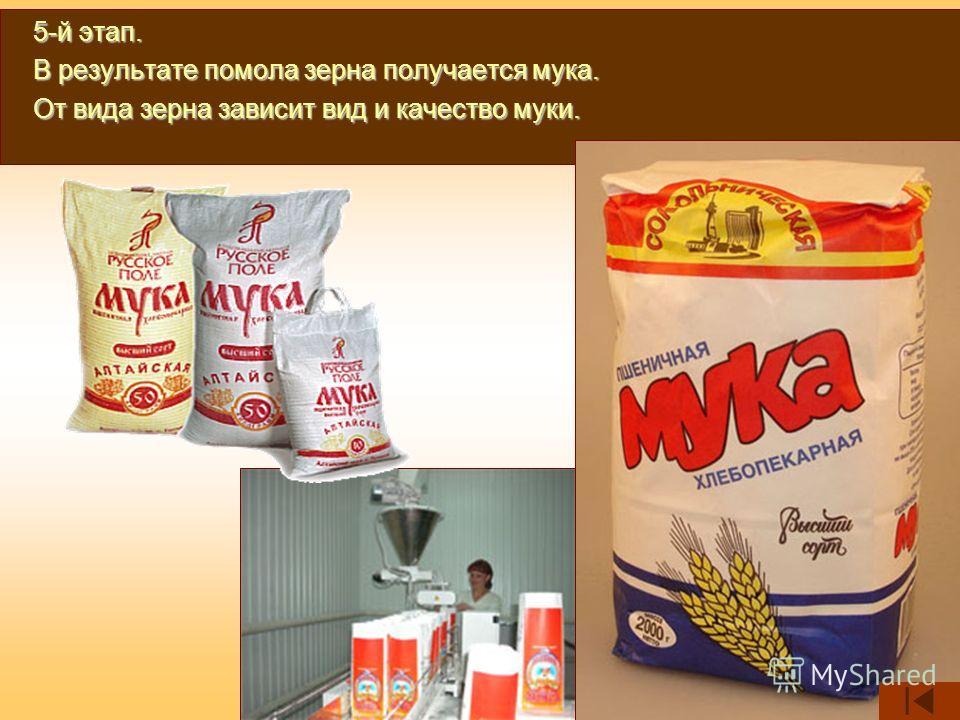 5-й этап. В результате помола зерна получается мука. От вида зерна зависит вид и качество муки.