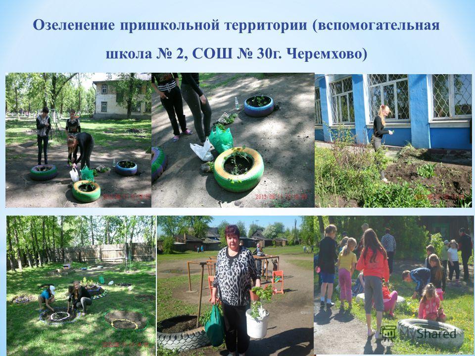 Озеленение пришкольной территории (вспомогательная школа 2, СОШ 30г. Черемхово)