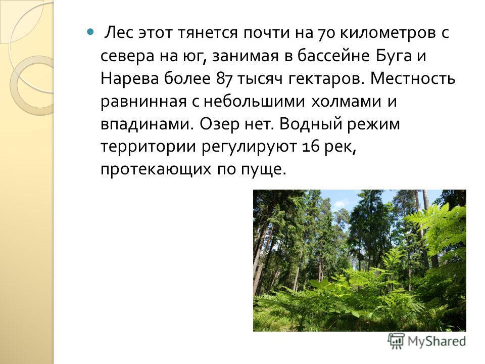 Лес этот тянется почти на 70 километров с севера на юг, занимая в бассейне Буга и Нарева более 87 тысяч гектаров. Местность равнинная с небольшими холмами и впадинами. Озер нет. Водный режим территории регулируют 16 рек, протекающих по пуще.