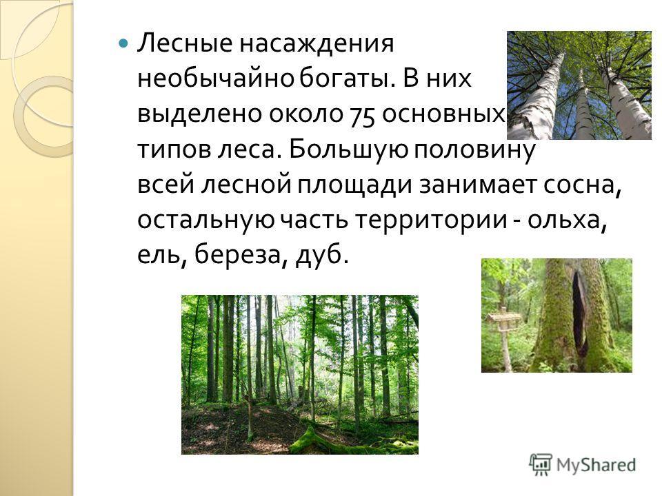 Лесные насаждения необычайно богаты. В них выделено около 75 основных типов леса. Большую половину всей лесной площади занимает сосна, остальную часть территории - ольха, ель, береза, дуб.