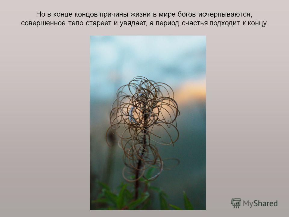 Но в конце концов причины жизни в мире богов исчерпываются, совершенное тело стареет и увядает, а период счастья подходит к концу.