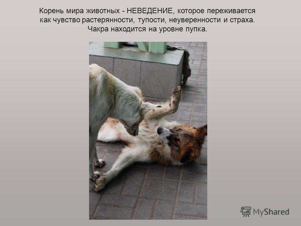 Корень мира животных - НЕВЕДЕНИЕ, которое переживается как чувство растерянности, тупости, неуверенности и страха. Чакра находится на уровне пупка.