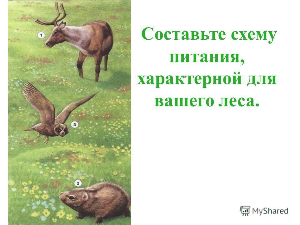 Составьте схему питания, характерной для вашего леса.