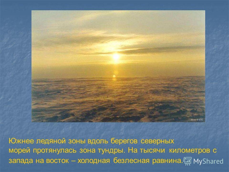 Южнее ледяной зоны вдоль берегов северных морей протянулась зона тундры. На тысячи километров с запада на восток – холодная безлесная равнина. Южнее ледяной зоны вдоль берегов северных морей протянулась зона тундры. На тысячи километров с запада на в