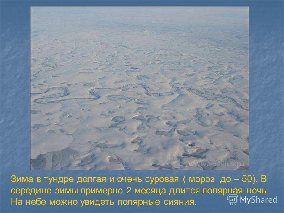 Зима в тундре долгая и очень суровая ( мороз до – 50). В середине зимы примерно 2 месяца длится полярная ночь. На небе можно увидеть полярные сияния.