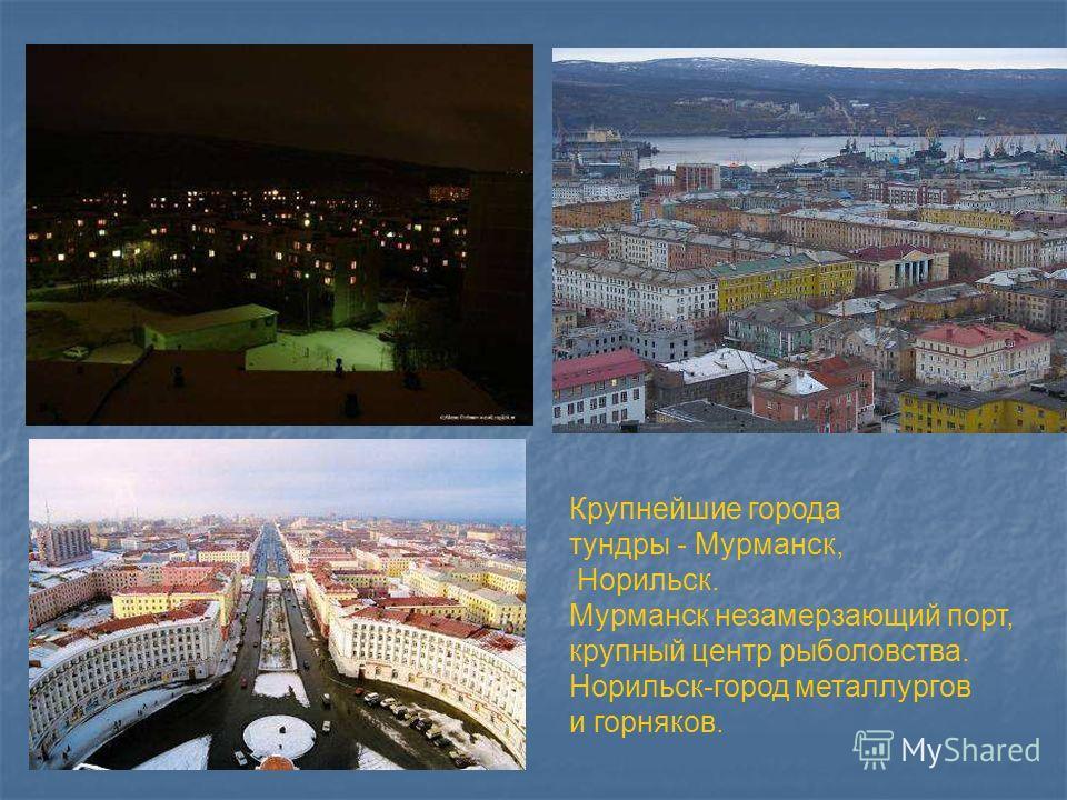 Крупнейшие города тундры - Мурманск, Норильск. Мурманск незамерзающий порт, крупный центр рыболовства. Норильск-город металлургов и горняков. Крупнейшие города тундры - мурманск, норильск. Мурманск незамерзающий порт, крупный центр рыболовства. Норил