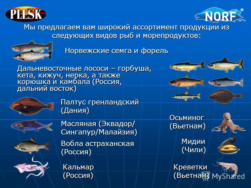 Мы предлагаем вам широкий ассортимент продукции из следующих видов рыб и морепродуктов: Норвежские семга и форель Дальневосточные лососи – горбуша, кета, кижуч, нерка, а также корюшка и камбала (Россия, дальний восток) Палтус гренландский (Дания) Мас