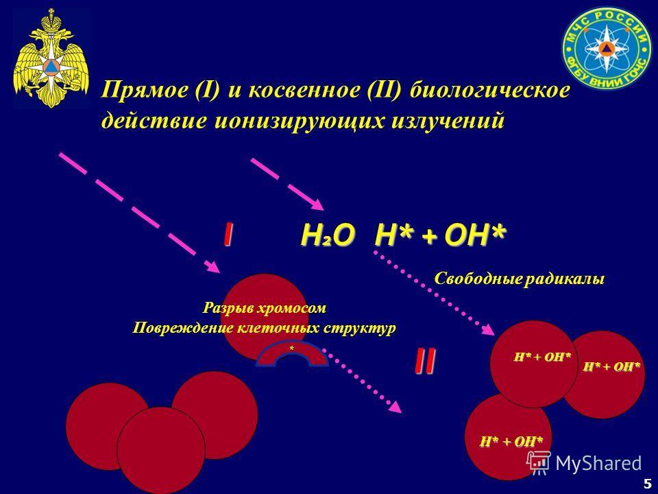 5 Прямое (I) и косвенное (II) биологическое действие ионизирующих излучений Разрыв хромосом Повреждение клеточных структур I Н 2 О Н* + ОН* II Свободные радикалы Н* + ОН* *