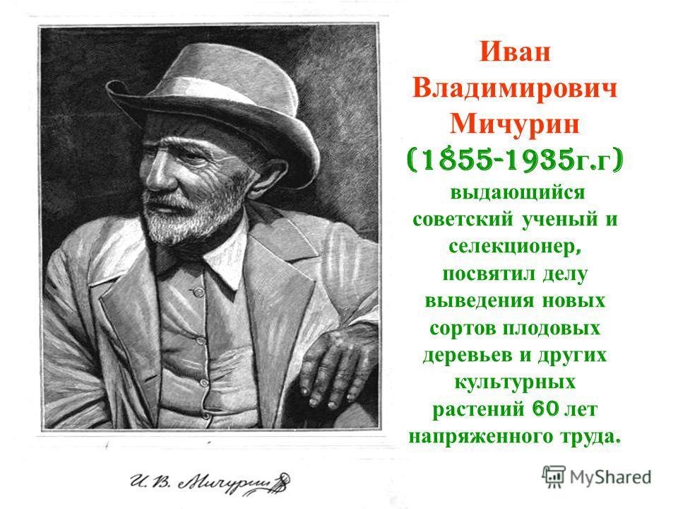 Иван Владимирович Мичурин (1855-1935 г. г ) выдающийся советский ученый и селекционер, посвятил делу выведения новых сортов плодовых деревьев и других культурных растений 60 лет напряженного труда.