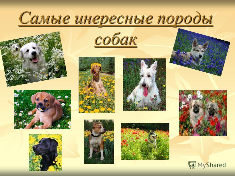 Самые инересные породы собак