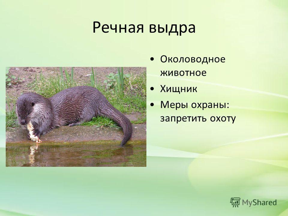 Речная выдра Околоводное животное Хищник Меры охраны: запретить охоту