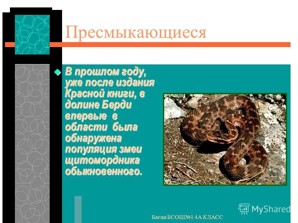 Баган БСОШ1 4А КЛАСС Пресмыкающиеся В прошлом году, уже после издания Красной книги, в долине Берди впервые в области была обнаружена популяция змеи щитомордника обыкновенного. В прошлом году, уже после издания Красной книги, в долине Берди впервые в