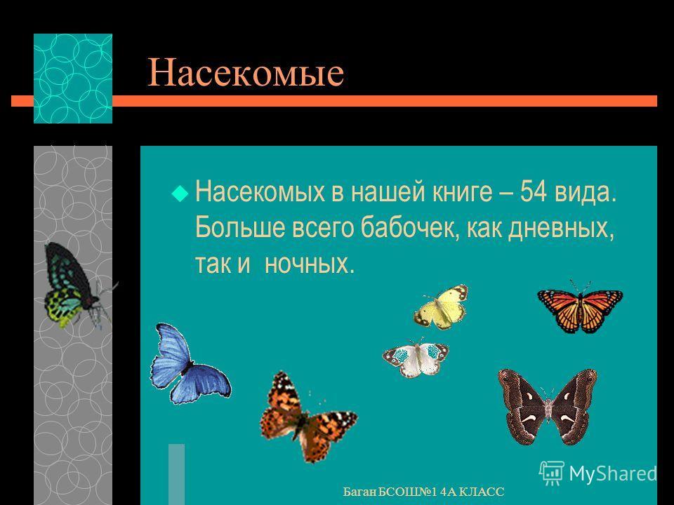 Баган БСОШ1 4А КЛАСС Насекомые Насекомых в нашей книге – 54 вида. Больше всего бабочек, как дневных, так и ночных.