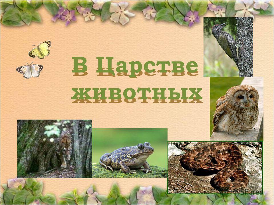 В Царстве животных