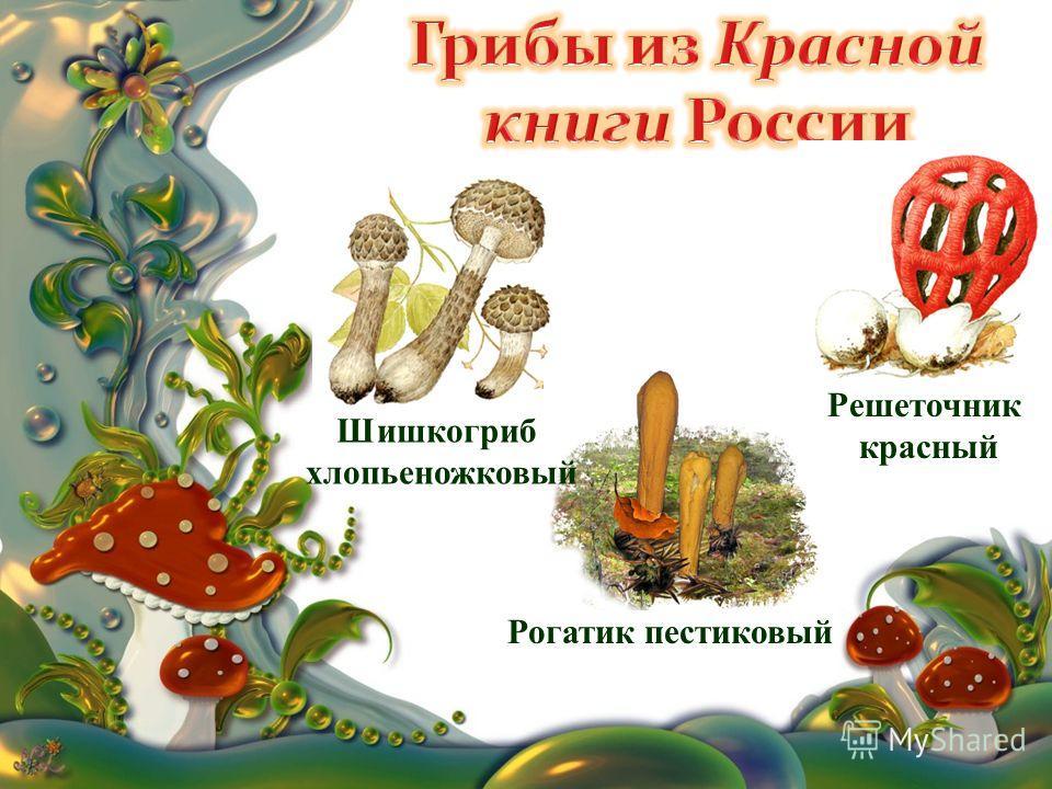 Шишкогриб хлопьеножковый Решеточник красный Рогатик пестиковый