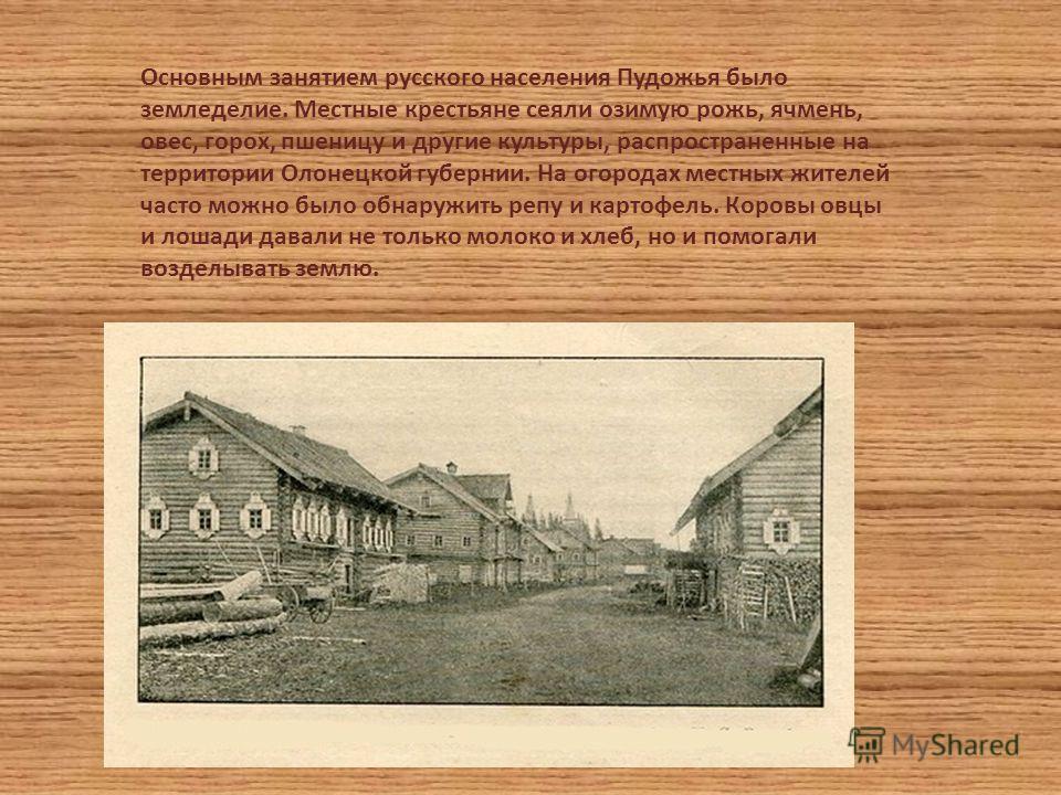 Основным занятием русского населения Пудожья было земледелие. Местные крестьяне сеяли озимую рожь, ячмень, овес, горох, пшеницу и другие культуры, распространенные на территории Олонецкой губернии. На огородах местных жителей часто можно было обнаруж