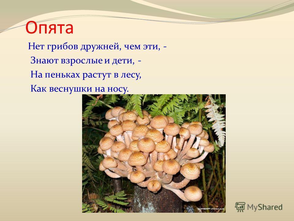 Опята Нет грибов дружней, чем эти, - Знают взрослые и дети, - На пеньках растут в лесу, Как веснушки на носу.