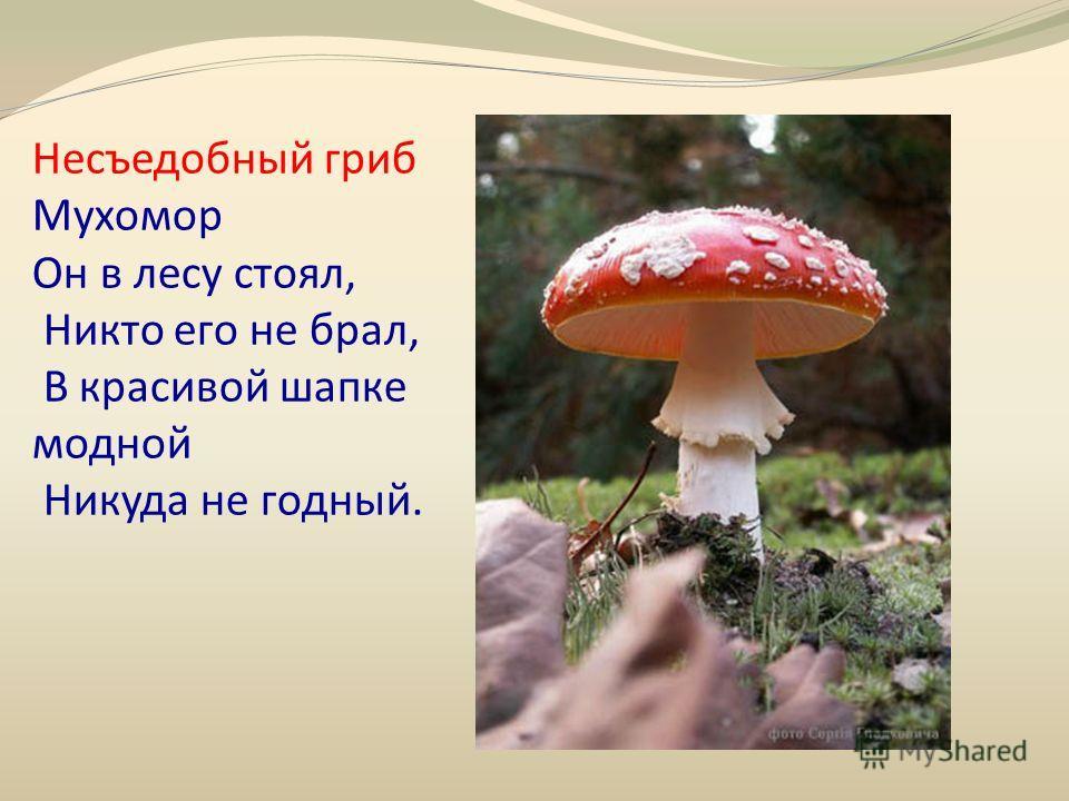 Несъедобный гриб Мухомор Он в лесу стоял, Никто его не брал, В красивой шапке модной Никуда не годный.