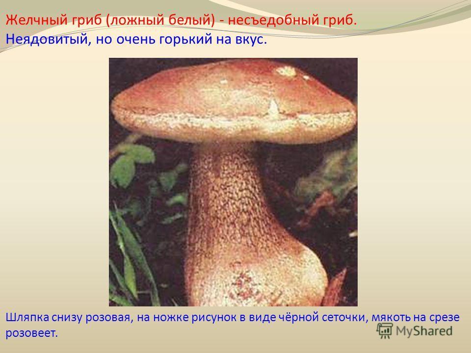 Желчный гриб (ложный белый) - несъедобный гриб. Неядовитый, но очень горький на вкус. Шляпка снизу розовая, на ножке рисунок в виде чёрной сеточки, мякоть на срезе розовеет.