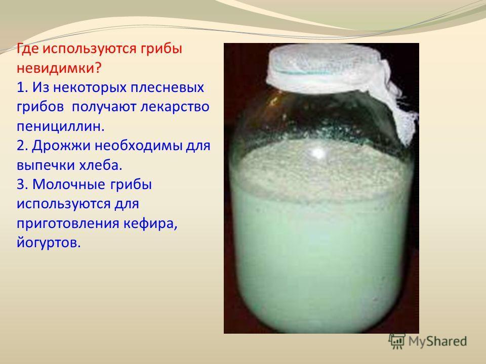 Где используются грибы невидимки? 1. Из некоторых плесневых грибов получают лекарство пенициллин. 2. Дрожжи необходимы для выпечки хлеба. 3. Молочные грибы используются для приготовления кефира, йогуртов.