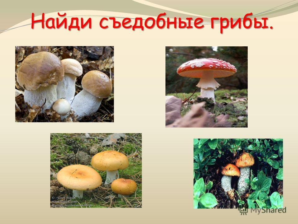 Найди съедобные грибы.