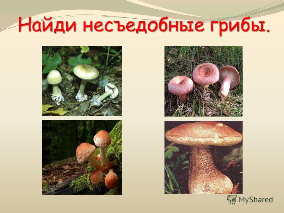 Найди несъедобные грибы.