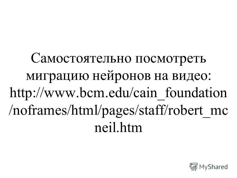 Самостоятельно посмотреть миграцию нейронов на видео: http://www.bcm.edu/cain_foundation /noframes/html/pages/staff/robert_mc neil.htm