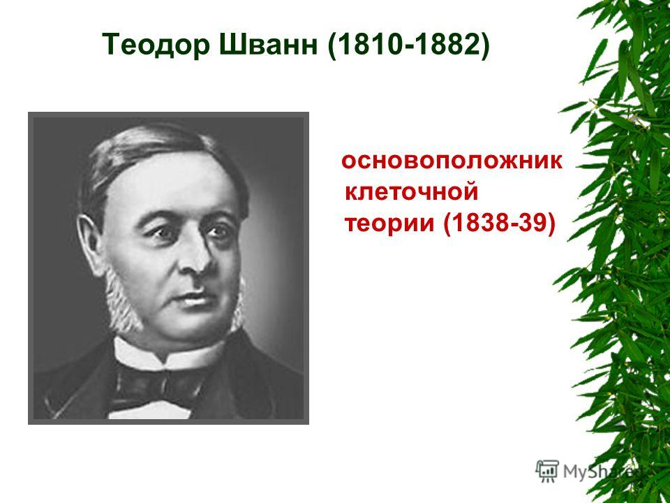 Теодор Шванн (1810-1882) основоположник клеточной теории (1838-39)
