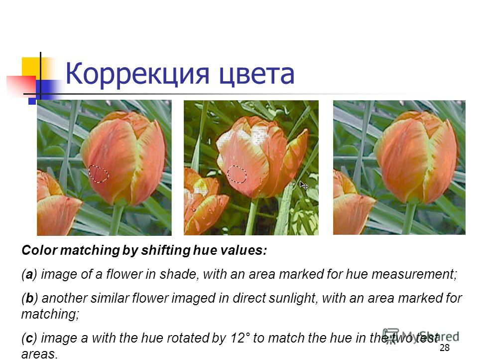 28 Коррекция цвета Color matching by shifting hue values: (a) image of a flower in shade, with an area marked for hue measurement; (b) another similar flower imaged in direct sunlight, with an area marked for matching; (c) image a with the hue rotate