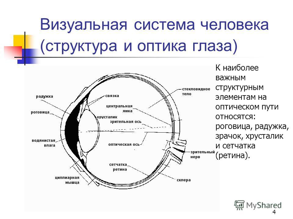 4 Визуальная система человека (структура и оптика глаза) К наиболее важным структурным элементам на оптическом пути относятся: роговица, радужка, зрачок, хрусталик и сетчатка (ретина).