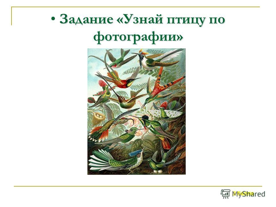 Этих птиц называют летающими цветами тропиков. 3 балла Задание «Узнай птицу по описанию»