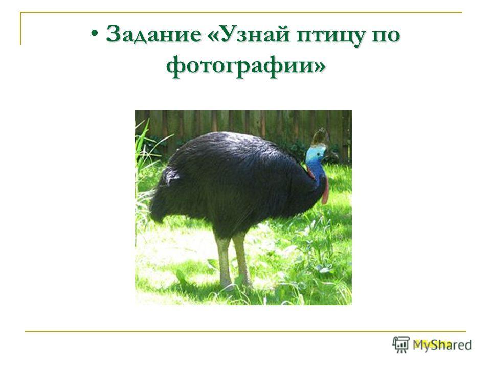 Обитает в Австралии. Не умеет летать. На голове роговой «шлем», который помогает птице раздвигать ветки в лесу. Рыбу ловит необычным способом. 3 балла Задание «Узнай птицу по описанию»
