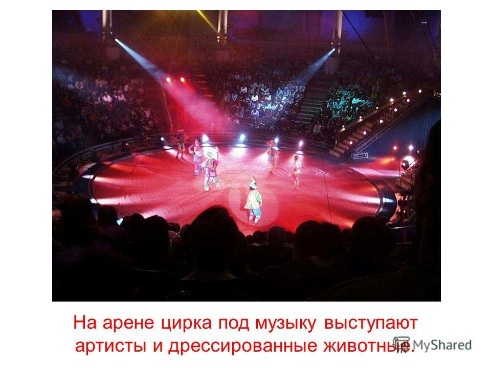 цирк Цирк.
