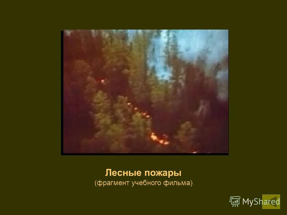 Лесные пожары (фрагмент учебного фильма)