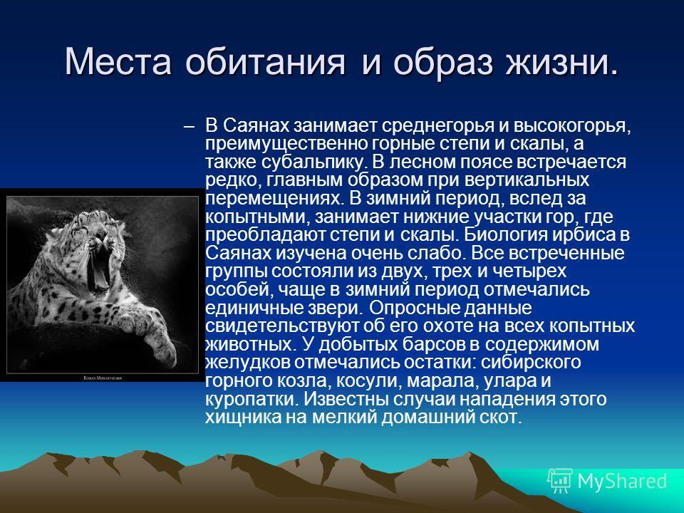 Места обитания и образ жизни. –В Саянах занимает среднегорья и высокогорья, преимущественно горные степи и скалы, а также субальпику. В лесном поясе встречается редко, главным образом при вертикальных перемещениях. В зимний период, вслед за копытными