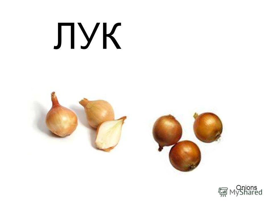 ЛУК Onions Лук onions